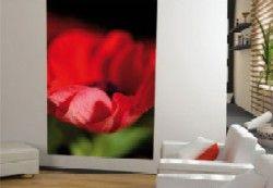 fiori e pareti