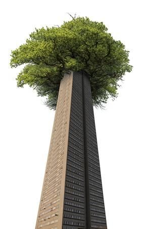 large-tree-tower
