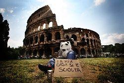 orsi_polari_senzatetto_a_roma