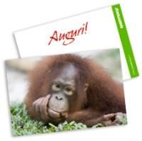 Christmas-Card-greenpeace