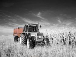 codice_agricolo