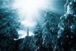 raccolta_alberi_di_natale