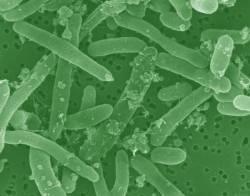 batterio_biocarburante