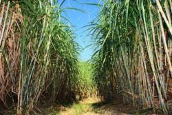 biomasse_agrienergia