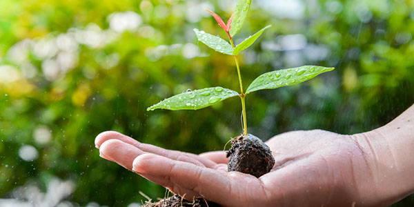 coltivare-avocado