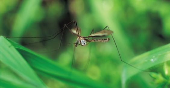 zanzare_malaria