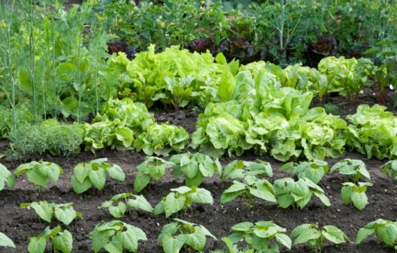 contadini_biologici