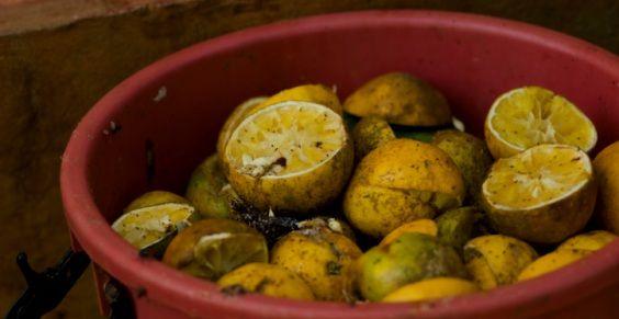 compost_frutta