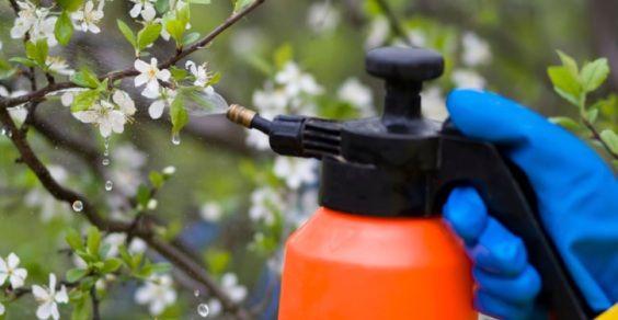 pesticidi_nel_piatto