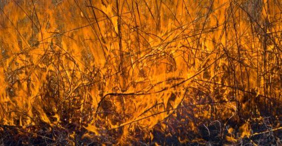 ecosistema_incendi_2010