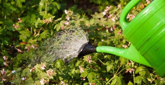 Come Costruire Un Impianto Di Irrigazione A Goccia Con Pochi