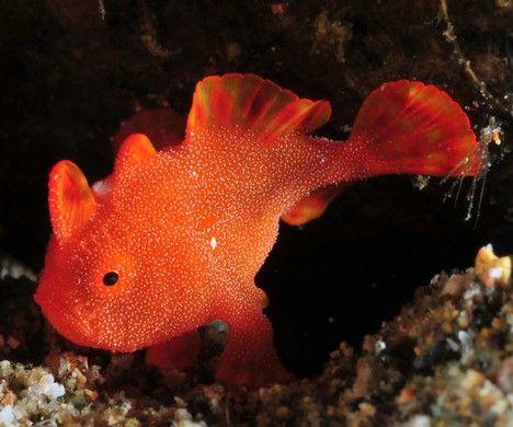 pesce_rosso