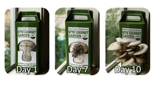 mushroom-bag-garden-2