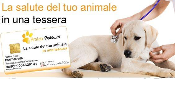 Animal Pets Card