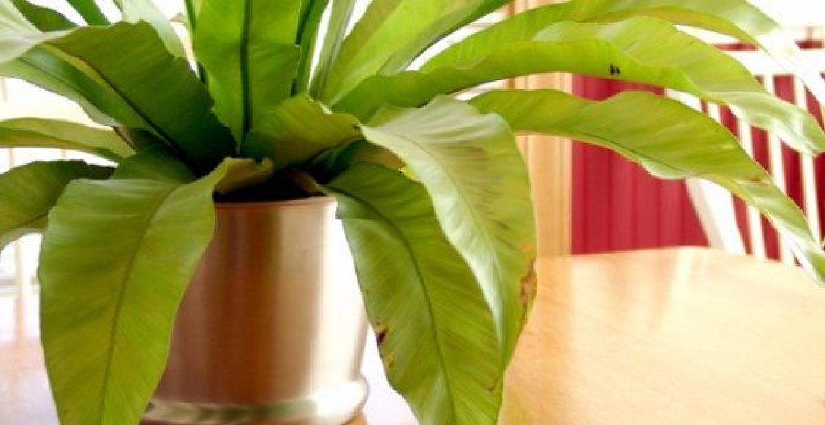 Piante Da Appartamento Utili.Inquinamento Domestico 15 Piante Da Appartamento Che Depurano L