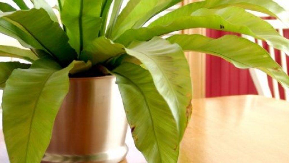 Piante Da Appartamento Che Purificano L Aria.Inquinamento Domestico 15 Piante Da Appartamento Che Depurano L