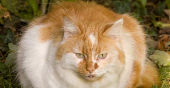animali_grassi