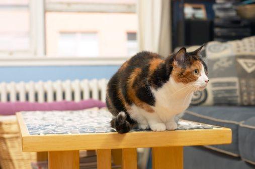 gatto_casa