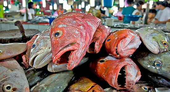 A_pile_of_dead_fish