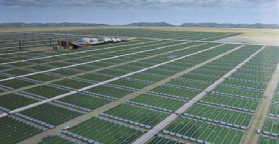 biocarburanti_alghe