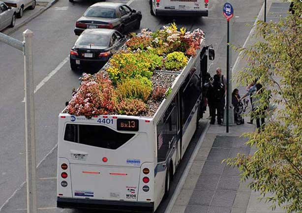 rooftopbus-bus-roots
