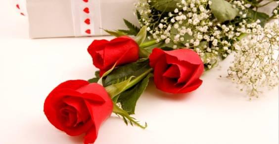 rose-san-valentino