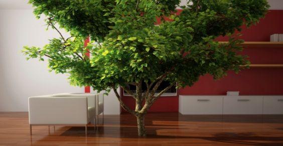 Piante Grandi Da Interno.Coltivazione Indoor Le 8 Migliori Piante Da Crescere