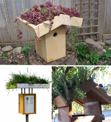 crazy-green-roof-birdhouses