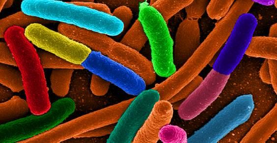 batterio_E.coli