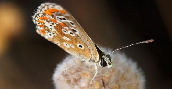 biodiversita_pil