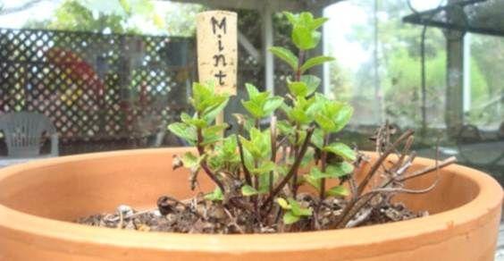 etichette_piante
