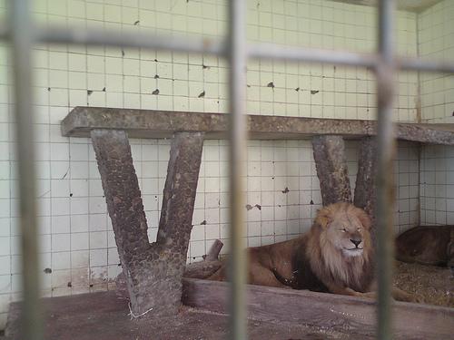 Tirana_zoo