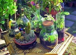 piante_sottovetro