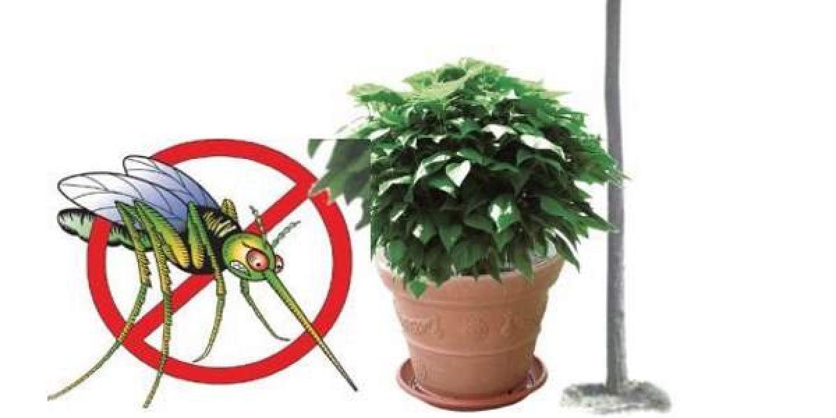 Piante Da Appartamento Antizanzare.5 Piante Anti Zanzare Facili Da Coltivare Greenme It