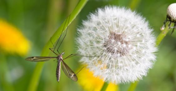 rimedi-contro-zanzare