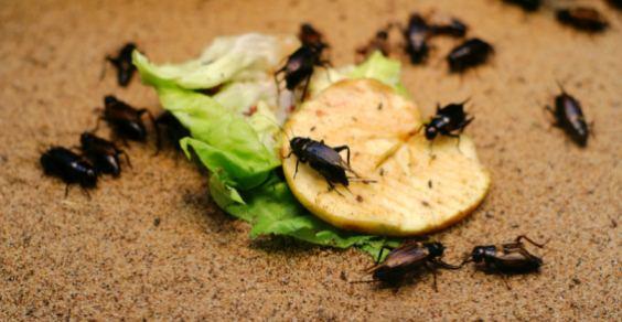 Rimedi naturali per tenere lontano gli insetti: la guida ...