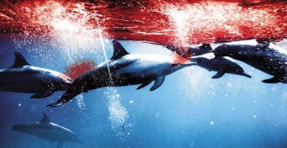 mattanza-delfini