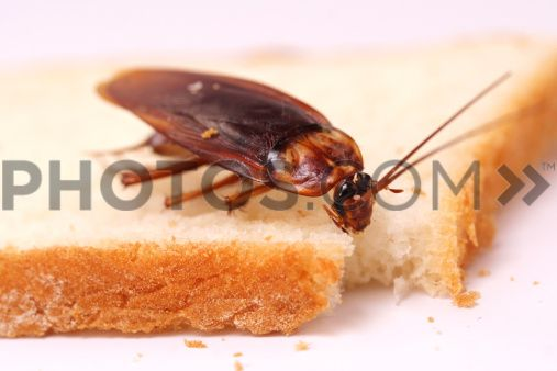 scarafaggi2