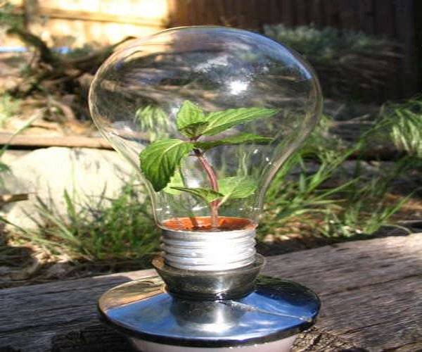 greenhouse_in_a_light_bulb_aalqe