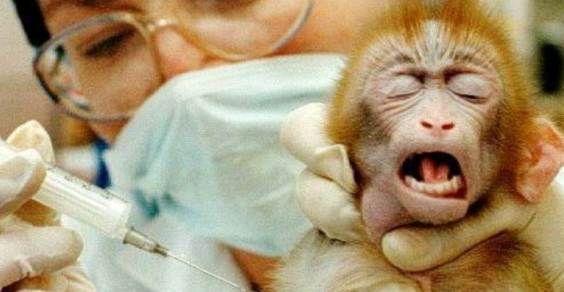 vivisezione-italia