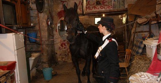cavalli_zoomafie