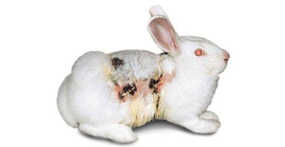 conigli vivisezione