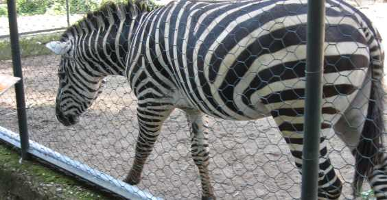 zoo_Napoli