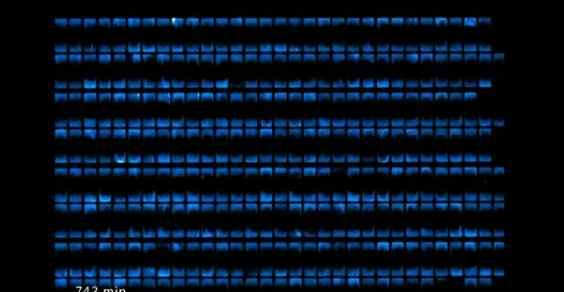 illuminazione_batteri
