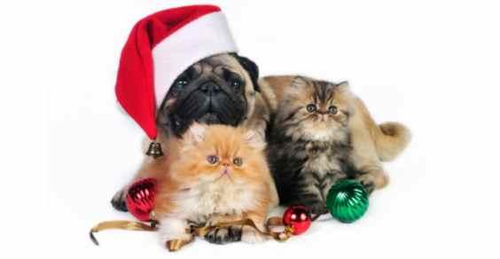 Immagini Natalizie Di Animali.Regali Di Natale Per Gli Amanti Degli Animali Greenme It
