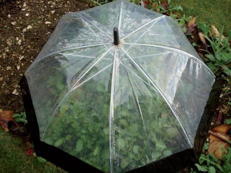 serra_ombrello