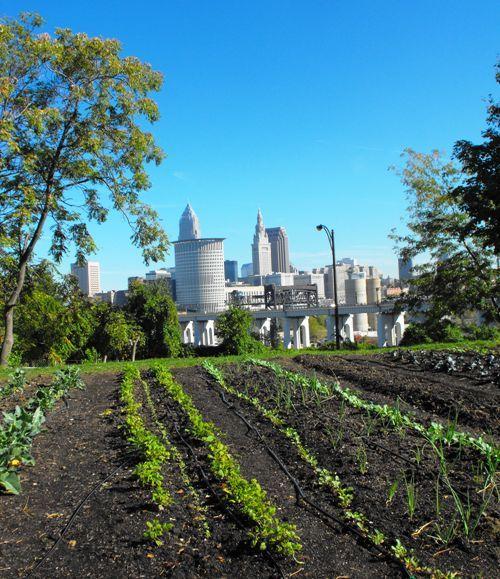 ohio_city_farm2