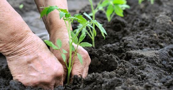agricoltura_sost_ifad