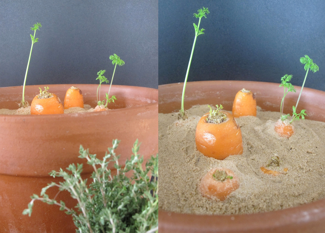 carote sabbia