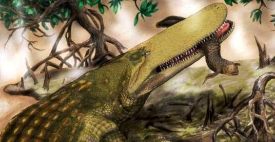 shield-croc-